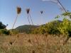 photo012_5